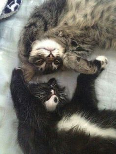 Holdz meh paws! <3 #adorable #kittehs #love #catlove #cute