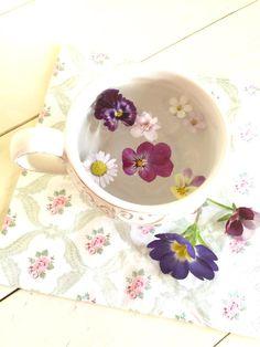 バコパ ライラックミスト スノーフレーク バレリーナの画像 by yuchi-chiさん イングリッシュデージー アルムの空とビオラとプリムラ ポリアンサと初心者ですとフレンチテイストと冬でも花いっぱいにしたい!とIKEAのペーパーナプキンとティーカップと今日の一枚と水に浮かべてと乙女風と小花 (2016月1月9日) みどりでつながるGreenSnap