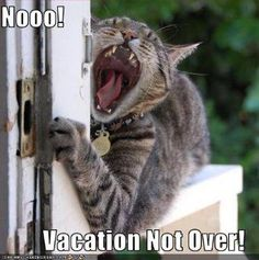 Did you pass the vacation mode or not yet?
