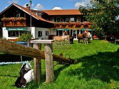 Ganz nah dran sein - im Stall helfen, Pony reiten und mit den Bauer auf das Feld begleiten. Vieles gibt es zu entdecken -ein reines Abenteuer auf Ferienhof Martin in Seeg/Allgäu - ausgezeichnet mit dem Goldenen Gockel