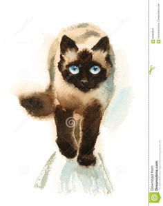 Walking Siamese Cat Watercolor Animals Pets Illustration Hand Painted