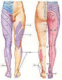 La ración la alimentación al régimen del vientre