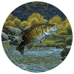This wrapped canvas features original art by Mark Susinno and offers the look and feel of an original wildlife painting at a reasonable price. This breathtaking canvas arrives ready to hang unframed, Gone Fishing, Kayak Fishing, Fishing Tips, Fishing Hole, Fishing Boats, Wildlife Paintings, Wildlife Art, Fish Paintings, Fish Artwork