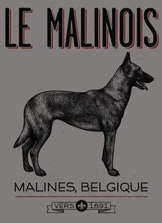 Le Malinois - American Handler