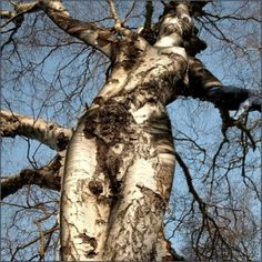And the woman came forth from the tree...  This is so cool and reaffirms my desire to get a tree tattoo