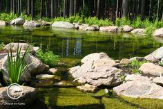 #landcape #architecture #garden #lagoon #pond #forest