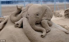 Sand elephant :)