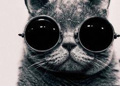 Cool kitty