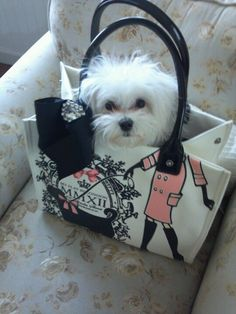 Maltese puppy in Brighton Meet Me At My Flat In London bag Cute Puppies, Cute Dogs, Dogs And Puppies, Doggies, Animals And Pets, Baby Animals, Cute Animals, Beautiful Dogs, Animals Beautiful