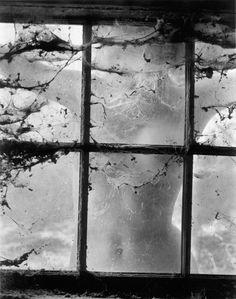 Nude_behind_Cobwebbed_Window_1955_0484_.jpg (630×800)