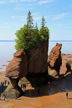 Visiting Hopewell Rocks in New Brunswick Canada Hopewell Rocks, New Brunswick Canada, Canadian Culture, Road Trip, Natural Structures, Atlantic Canada, Newfoundland And Labrador, Walking In Nature, Canada Travel