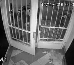 InfoNavWeb                       Informação, Notícias,Videos, Diversão, Games e Tecnologia.  : Vídeo mostra ação de assassino que matou mulher a ...