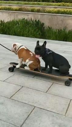 Starts off so smooth - Tierbilder - Perros Funny Dog Fails, Funny Animal Videos, Cute Funny Animals, Dog Memes, Funny Animal Pictures, Cute Baby Animals, Animal Memes, Funny Dogs, Animals And Pets