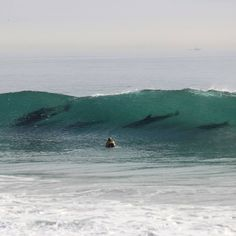 Surfing With Dolphins Ventura Ca Rincon Beach 2017 Clic Surf Compeion Image By David Burroughs