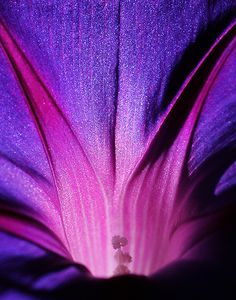 ~~Mysteries of Life | morning glory macro | by andras120~~