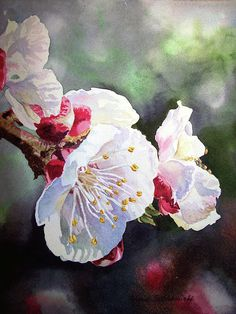 Apricot Blossoms - just beautiful :0) http://fineartamerica.com/featured/apricot-flowers-irina-sztukowski.html