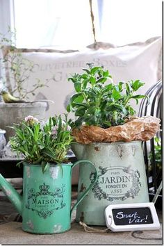 Lovely old pots with herbs