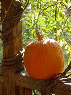 Pumpkin on a rail Fall Pumpkins, Halloween Pumpkins, Fall Halloween, Halloween Pics, Autumn Day, Autumn Leaves, Autumn Song, Winter, October Country