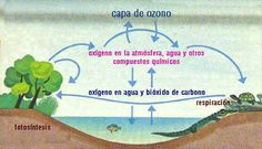 10 Ideas De Jacquelin Murcielago Oxigeno Fotosintesis Murcielagos