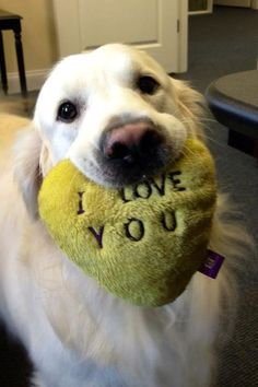 love the dog, love the photo...I'm sure if he could read, he would still have put this in his mouth. A dog's love is forever.