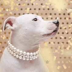 The Beebs in Ivory Pearl Dog CollarCat collar Buckle