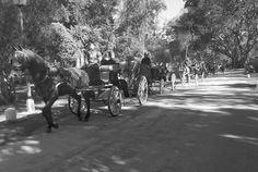 Saliendo del punto de fuga  #parquemarialuisa #igers #igerssevilla #igersspain #igersandalucia #instagramers #sevillahoy #svq #sevilla #ok_sevilla #estaes_sevilla #loves_sevilla #ig_sevilla
