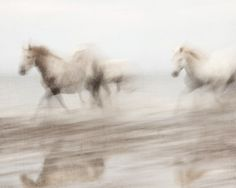 Abstract Horse photograph, Nature photography, White Horses Running, Ghosts, Ethereal, Camargue - Free Spirits - via Etsy.