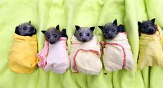 Bats creep me out but......baby bats wrapped up?  OMG!!