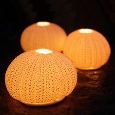 These beautiful porcelain Sea Urchin tea lights have a curious dramatic simplicity and are wonderfully enhanced when lit Sea Urchin Shell, Sea Urchins, Paua Shell, Driftwood Mirror, Lantern Chandelier, Lanterns, Ceramic Light, Seashell Art, Shell Crafts