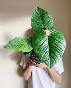 21 AMAZING tropical flowers for the home - indoorjungle Rare Plants, Exotic Plants, Tropical Plants, Tropical Flowers, Plant Decor, Indoor Plants, Indoor Flowers, Houseplants, Flower Pots