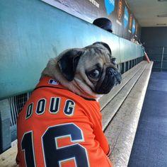 Doug The Pug (@itsdougthepug) | Twitter