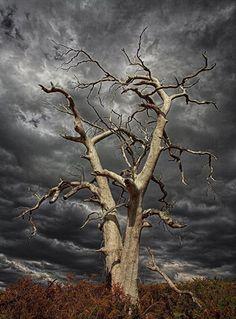 Creepy Old Tree Nature Ideas All Nature, Amazing Nature, Nature Tree, Weird Trees, Spooky Trees, Sky Tattoos, Lone Tree, Unique Trees, Old Trees