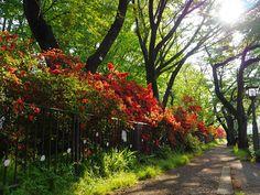 http://www.facebook.com/photo.php?fbid=540099842708865=a.507321505986699.137892.504778156241034=1