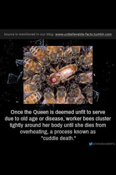 The Rise and Fall of a Queen Bee Wierd Facts, Unusual Facts, Wtf Fun Facts, Funny Facts, Interesting Facts, Pointless Facts, Weird, Awesome Facts, Bizarre Facts
