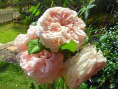 French, English, German and also David Austin and assorted roses are beautiful in my garden... this is Claire Rose