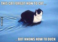 duck cat