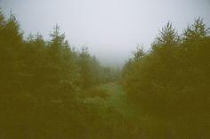 <3 misty landscapes