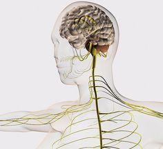 Экология здоровья: Кинезиология — это наука о развитии умственных способностей и достижении физического здоровья через двигательные упражнения. Поделюсь своим личным опытом применения простых кинезиологических упражнений