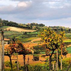 Monferrato , province of Alessandria , Piemonte