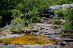 Somersby Falls, New South Wales, Australia New South, South Wales, Water Features, Golf Courses, Waterfall, Australia, River, Country, Outdoor