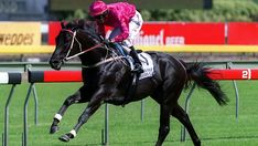 Lonhro(1998)(Colt)Octagonal- Shadea By Straight Strike. Outcross In First 5 Generations. 35 Starts 26 Wins 3 Seconds 2 Thirds. $5,790,510 in Australian Funds. Won 11 Group 1 Races In Australia And New Zealand During His Racing Career.