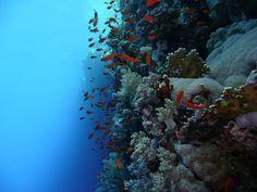 Elphantstone reef