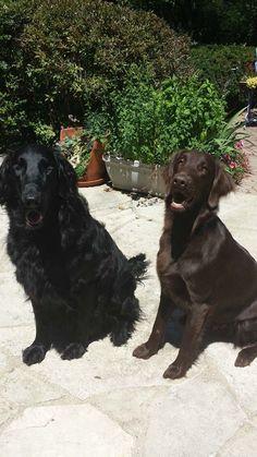 historia de perro ciego y su amigo adoptado