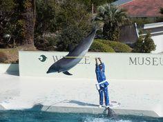 イルカの素晴らしい跳躍力が分かる一枚。