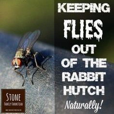 Keeping Flies Out of the Rabbit Hutch Naturally -Natural Rabbit Care - gardenfuzzgarden Bunny Cages, Rabbit Cages, House Rabbit, Rabbit Farm, Rabbit Life, Meat Rabbits, Raising Rabbits, Natural Fly Repellant, All About Rabbits
