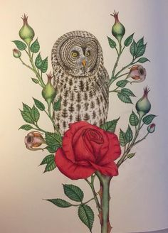 #Daisyfletcher #Birdtopia Rooster, Daisy, Painting, Animals, Art, Animais, Craft Art, Animales, Animaux