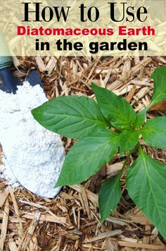 Pinterest the world s catalog of ideas - How to use diatomaceous earth in the garden ...