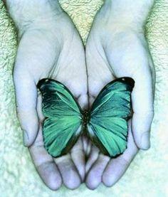 """Blog de Frases e Pensamentos: borboletas""""""""Somos como borboletas que voam por um dia e pensam que é para sempre."""" - Carl Sagan"""