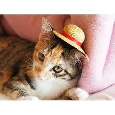 今日もお出かけしニャいのか #猫 #ねこ #ネコ #cat #kitten #麦わら帽子 #お出かけ #instacat #igersjp  休みに入ったと思ったらこっちは雨です洗車しようと思ったけどこれじゃ意味無いなぁどこかへ出掛けるにもお金がかかるしなぁ by yaki0555