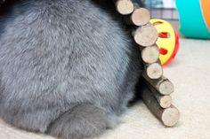 How to photograph your pet rabbit | Barks & Bunnies
